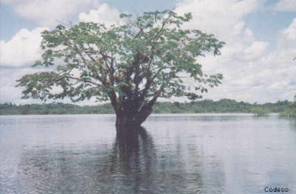 The Laguna Grande in the Cuyabeno Wildlife Production ReserveProvince of Sucumbíos - Ecuador