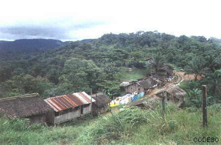 View of the community of Ventanas and the woods